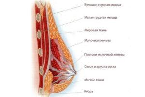Очень сильно болит грудь при нажатии