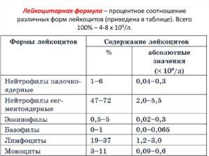 Нейтрофилов больше 6 процентов