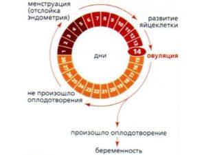 Незащищенный ПА в середине цикла