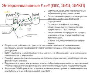 Обнаружена энтероинвазивной e coli 0144
