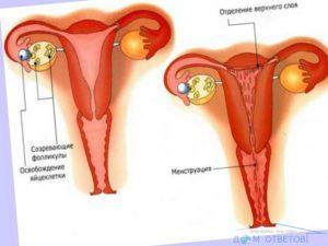 Обильность месячных после начала половой жизни