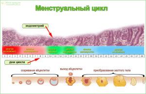 Нерегулярные месячные и очень короткий цикл