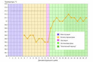Нужна ли мне поддержка второй фазы цикла при планировании беременности?