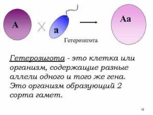 Гетерозигота крови по 3 мутациям