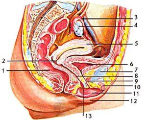 Образование между малыми половыми губами и входом во влагалище
