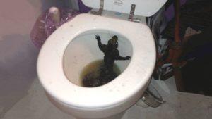 Не чувствую ночью, что хочу в туалет