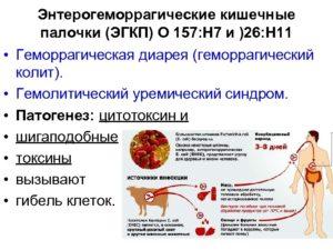 Гемолитическая кишечная палочка