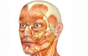 Головная боль. Онемение головы. Подергивание мышц лица