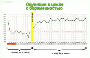 График базальной температуры, овуляция