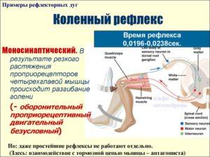 Низкий рефлекс коленных суставов