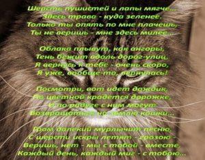 Не могу пережить смерть кота