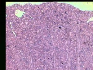Обзорная микроскопия