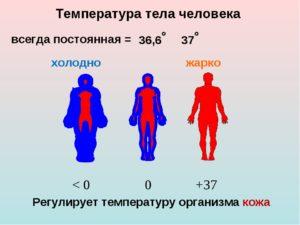 Низкая температура тела мерзнут ноги летом