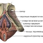 Онемение ноги после укола, боль в мышце