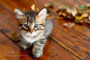 Хочу завести котёнка