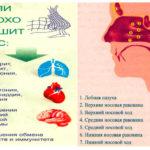 Гистология послед