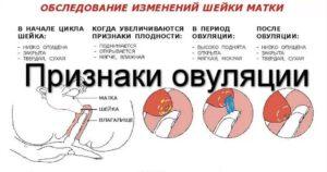 Незащищённый половой акт после менструации на 4 день