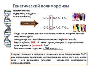 Определение генетического полиморфизма