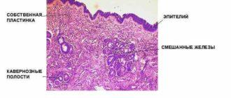 Гистология слизистой носа