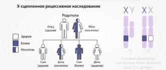 Передача генов по наследству
